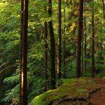 WaldKultur