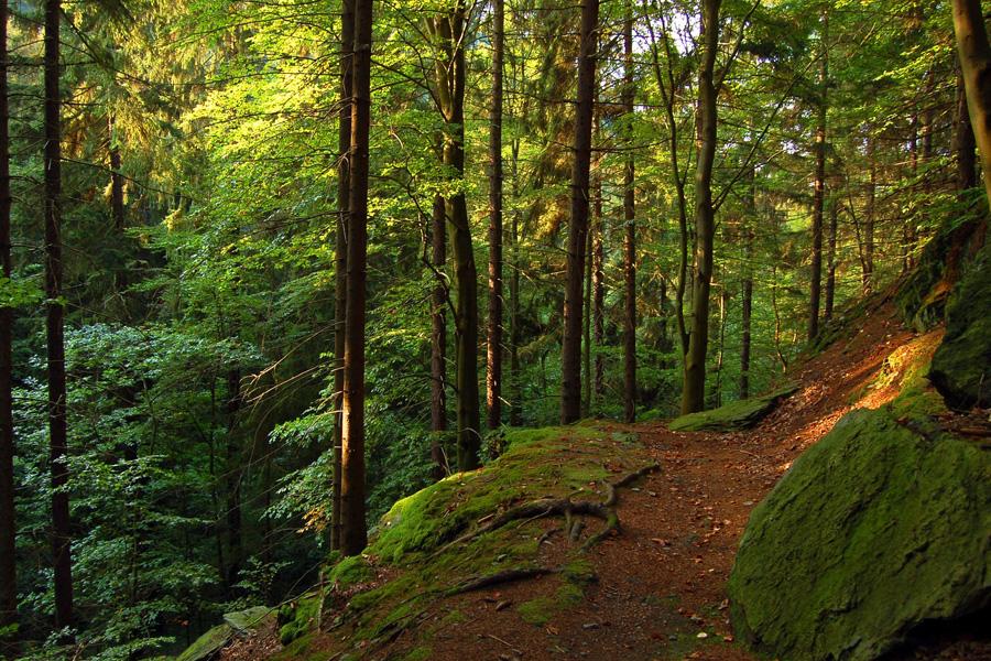 Der Rennsteig im Thüringer Wald