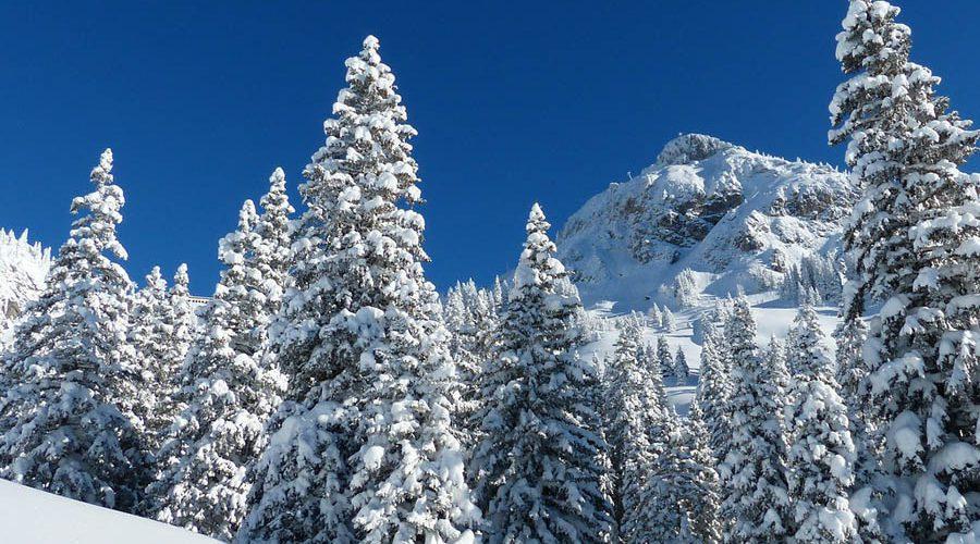 Winter-Zauber im Thüringer Wald