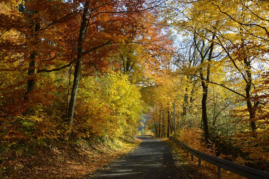 Herbstzauber –  Entspannung & Wellness im Thüringer Wald
